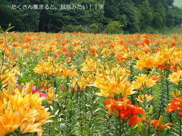 09_07_29_11_700