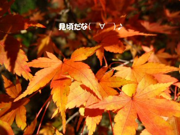 08_11_25_03
