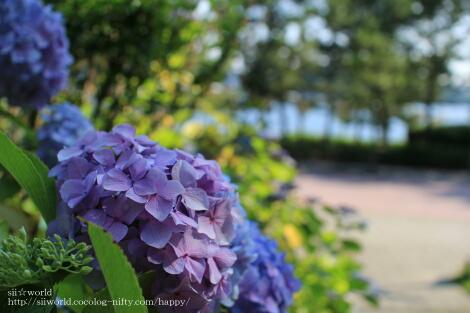 12_07_09_07_1