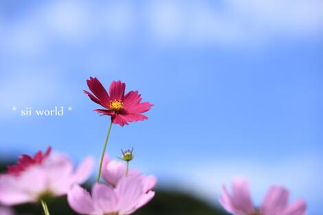 15_09_30_09