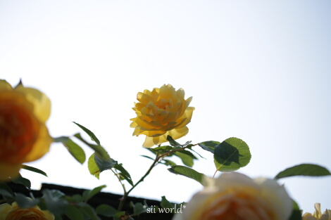 16_05_15_08