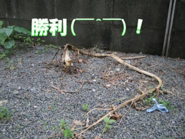 06_06_10_03
